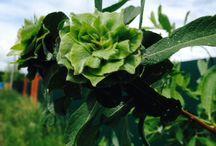 Мир растений/фотографии