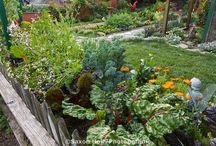 Edible Front Garden / by Three Janes Design