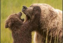 Bears, Etc.