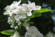 Bloeiwijzen en Voorjaarsplanten / De tuin