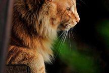Kitty cats =(`^.^´)=