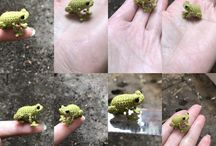 tiny frog crochet / https://m.youtube.com/channel/UCMq9r5fd2d1lUrtbAfZJ6sA/videos Www.etsy.com/shop/asiashopgifts  Www.facebook.com/asiashopgifts  www.pinterest.com/asiashopgifts www.instagram.com/asiashopgifts https://plus.google.com/+TrâmVũVươngMai