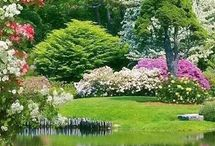 Soul Garden