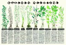 herbal & botanical art