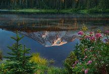 JEZERA /LAKE/ / krása jezer
