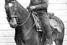 Horses used in wars