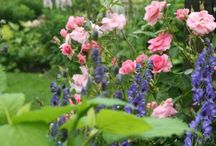 cottage gardens and flowers / by Tammy Toler