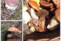 """""""Kam na houby"""" / Místa, kam se vydat, když chceme houbařit..."""