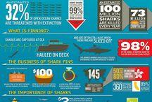 Vegan infographics! / by vegansaurus