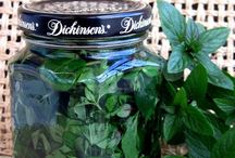 Meet the Mints! / all about peppermint, spearmint, cornmint, catnip