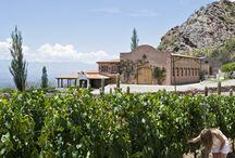 ruta de los vinos argentina