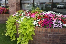 Spring & Summer Plant Color / Some examples of summer garden and potting designs done by the Barrett Lawn Care team!