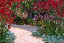 Los Angeles Drought Tolerant Garden