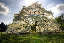 Sarah's love-Tree's / by Juanita McCue