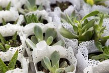 Succulents and lace party ideas
