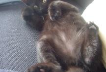 """Starbucks / My cat named """"Starbucks"""" :)"""