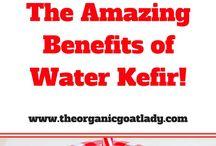 Fermented Drinks, Kombutcha & Kefir