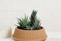 Succulents & Terracotta / by Elishka D'Silva