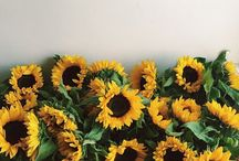 SunFlower☆♡