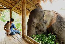 Elephants.. <3