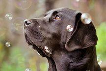 fotoshoot: honden