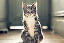 Viens mon chat ....