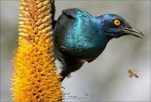 My Birdlife