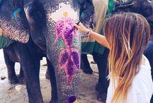 Слон из Таиланда