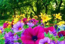 flower badhia