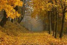 Le stagioni: Autunno