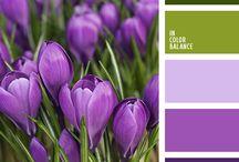 Pankey Color Combinations