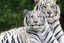 άγρια ζώα