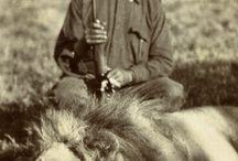 British Safari