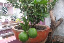 Gardening in Low Budget / This is all about create greenery at your homes corner..