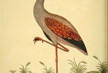 Flamingo Go kulubü
