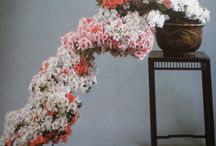 Fiori e piante / foto di fiori e piane