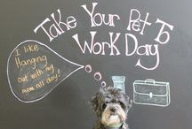Take Your Pet to Work Day / June 26, 2015