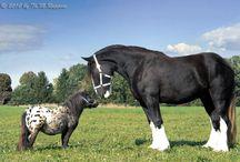 Près de 500 espèces de chevaux / Une découverte !