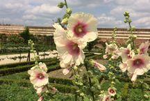 Nos jardins potagers à la Française