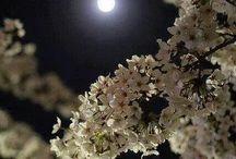 Moon♡♡♡