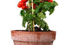 growing indoor vegs