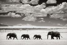 Andy Biggs Photo Safaris / by Eyes on Africa Safaris