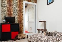 Five Star Hotel Built Just For Cats / Among the amenities of one of Britain's grandest hotels are private chauffeurs, a country club atmosphere, themed rooms and prawn feasts. Before you book a room, though, it's worth mentioning: this isn't a hotel for people. It's the UK's most luxurious cat hotel. | www.petnook.in #PetNook