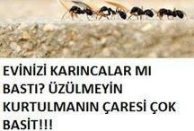 karınca ilacı