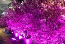KFG WORKS by flowerdeco specialist choice / 花門フラワーゲート フラワー装飾事例〈大野 雅史 監修〉