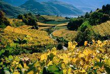 Wine || South Tyrol