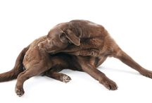 #itchypetseeyourvet / Dealing with #seasonalallergies in #dogs