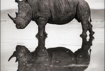 Book | Animal Rhinos