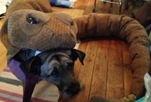 Mason the Dog's Hand-Made Rattlesnake Halloween Costume / Here is Mason in a homemade 10-foot-long rattlesnake Halloween Costume I made!
