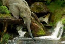 Il logo di Bricofer prende vita. Elefanti in azione! / Immagini curiose dei nostri amici elefanti!